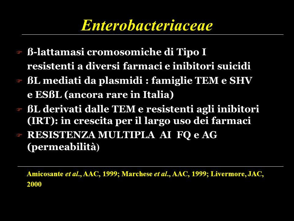 Enterobacteriaceae ß-lattamasi cromosomiche di Tipo I