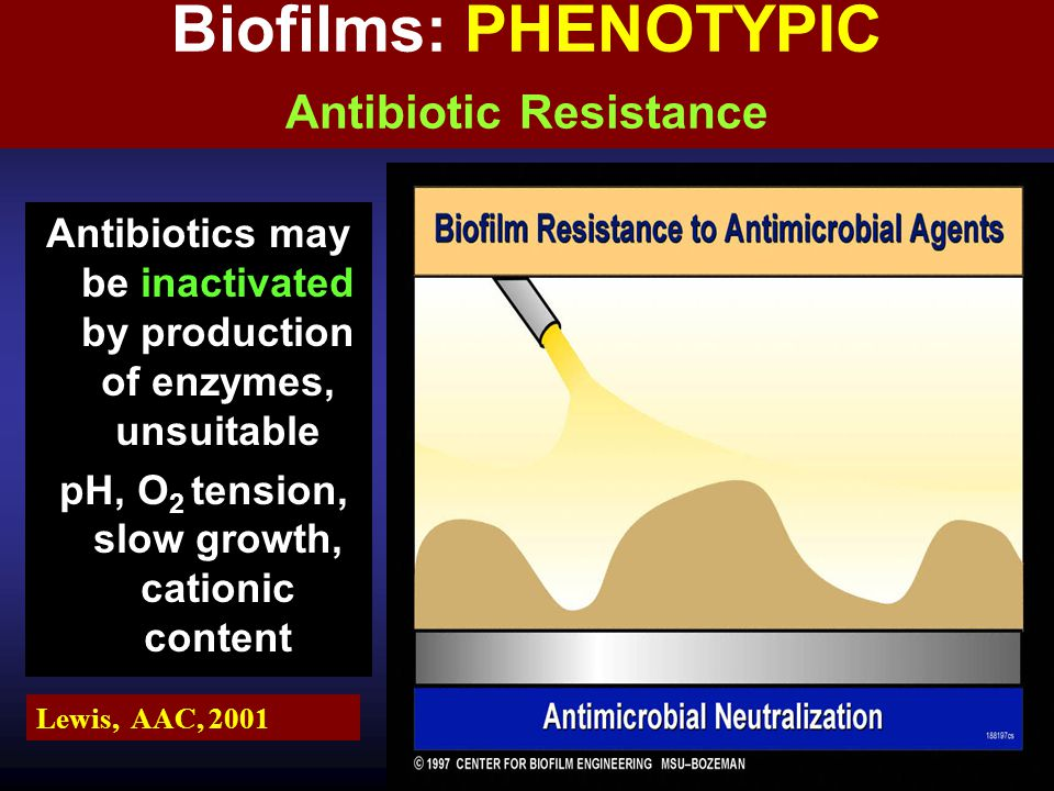 Biofilms: PHENOTYPIC Antibiotic Resistance