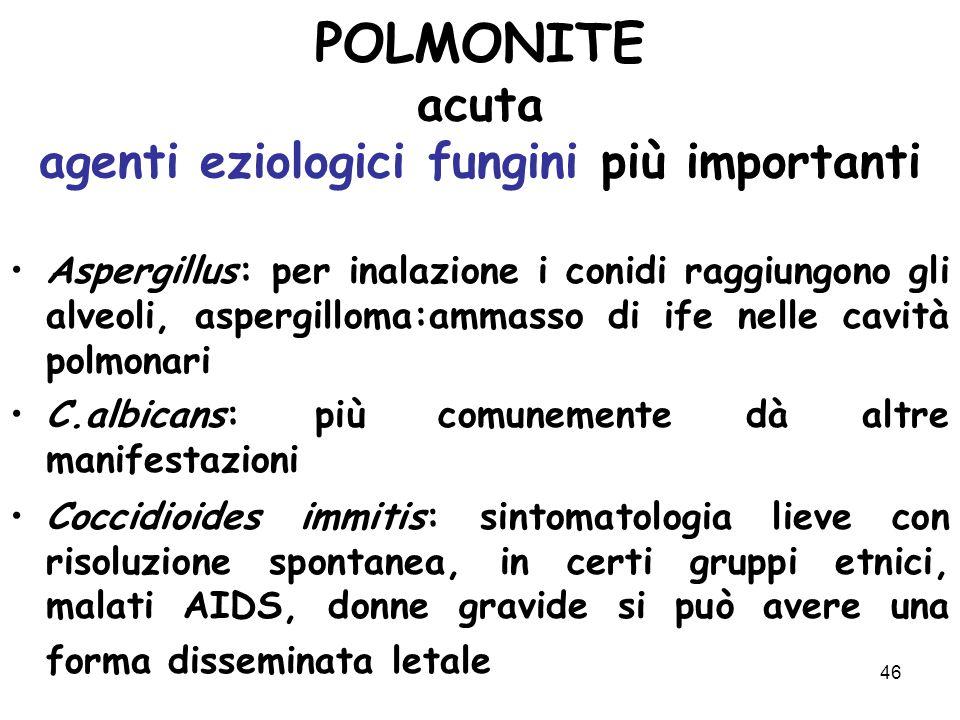 POLMONITE acuta agenti eziologici fungini più importanti