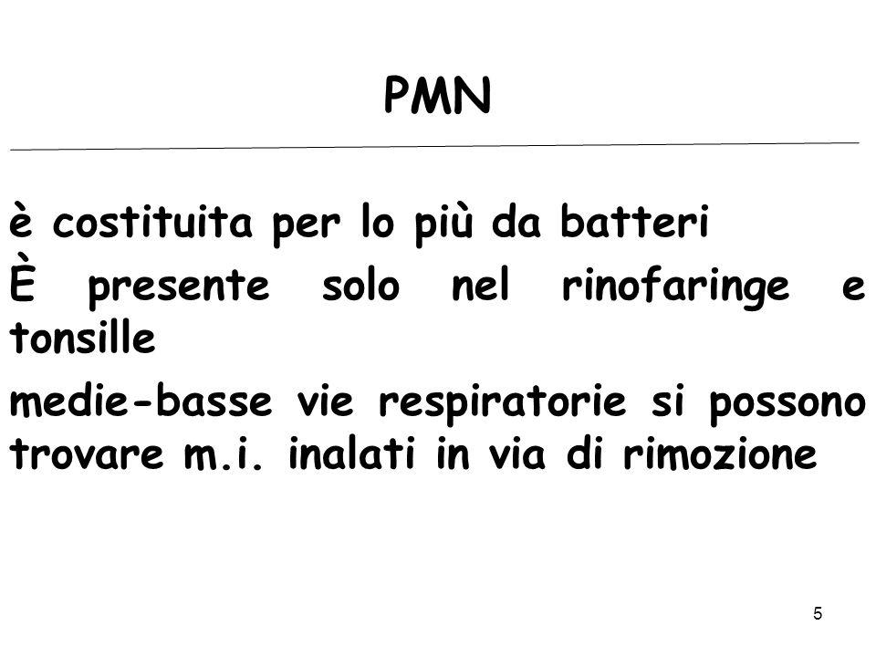 PMN è costituita per lo più da batteri