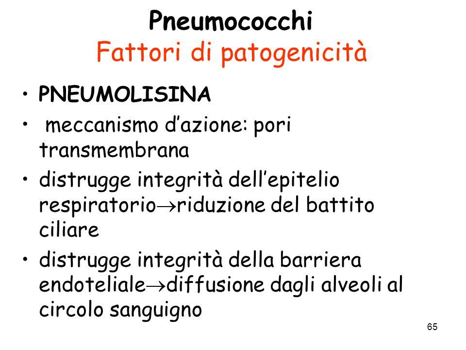 Pneumococchi Fattori di patogenicità