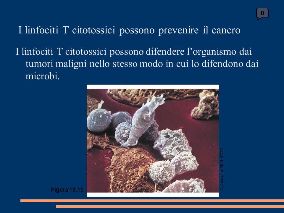 I linfociti T citotossici possono prevenire il cancro
