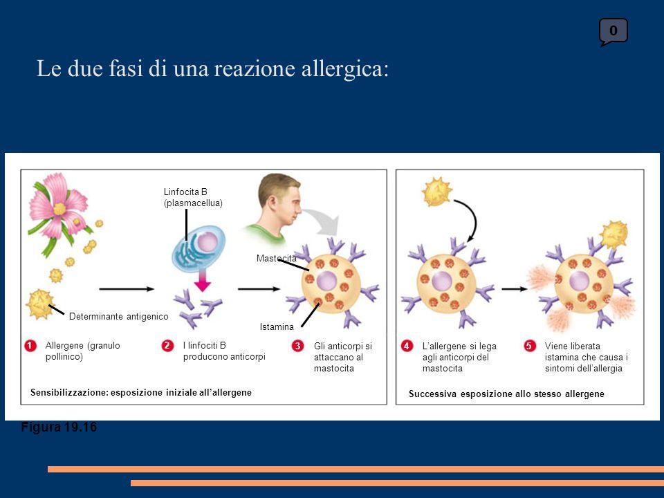 Le due fasi di una reazione allergica: