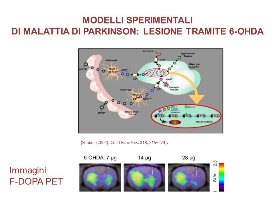 MODELLI SPERIMENTALI DI MALATTIA DI PARKINSON: LESIONE TRAMITE 6-OHDA