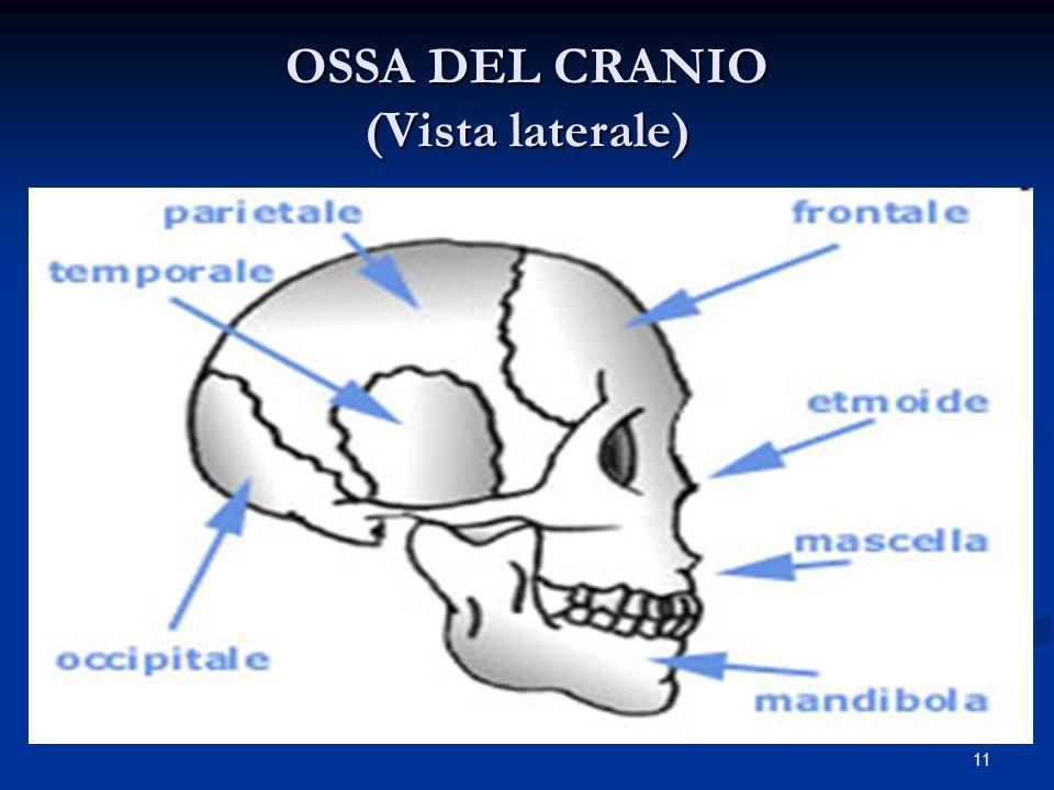 OSSA DEL CRANIO (Vista laterale)