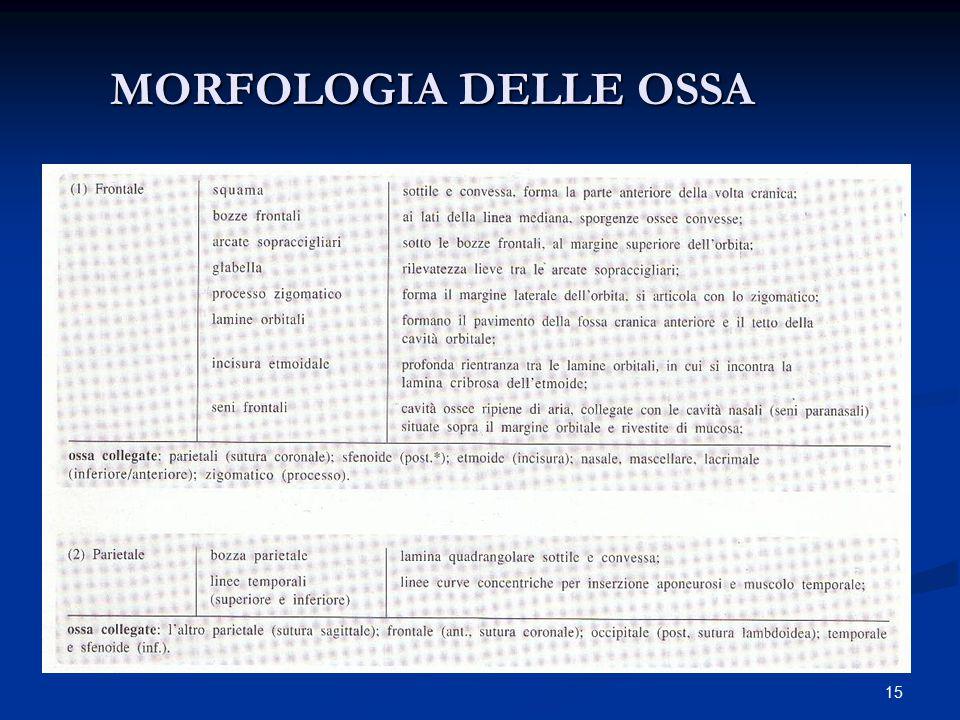 MORFOLOGIA DELLE OSSA