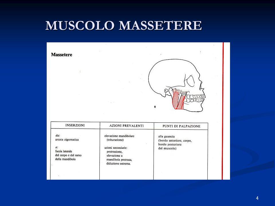 MUSCOLO MASSETERE