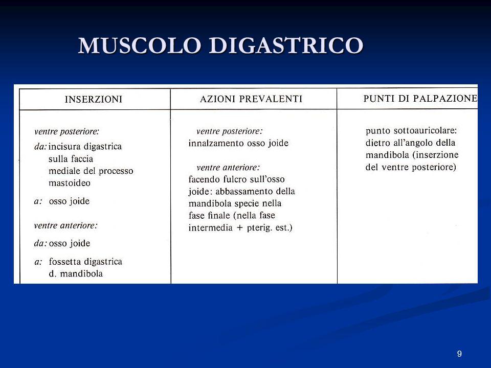 MUSCOLO DIGASTRICO