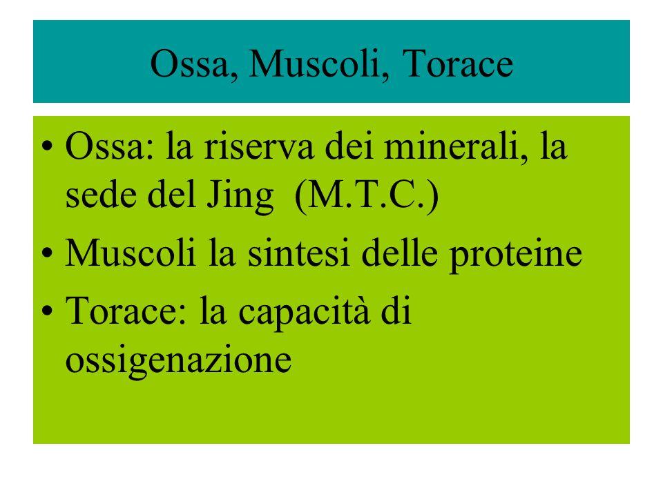 Ossa, Muscoli, Torace Ossa: la riserva dei minerali, la sede del Jing (M.T.C.) Muscoli la sintesi delle proteine.