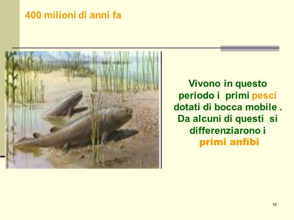 400 milioni di anni fa Vivono in questo periodo i primi pesci dotati di bocca mobile . Da alcuni di questi si differenziarono i.