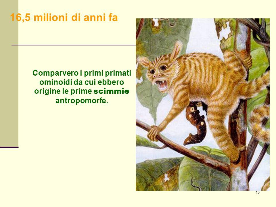 16,5 milioni di anni fa Comparvero i primi primati ominoidi da cui ebbero origine le prime scimmie antropomorfe.