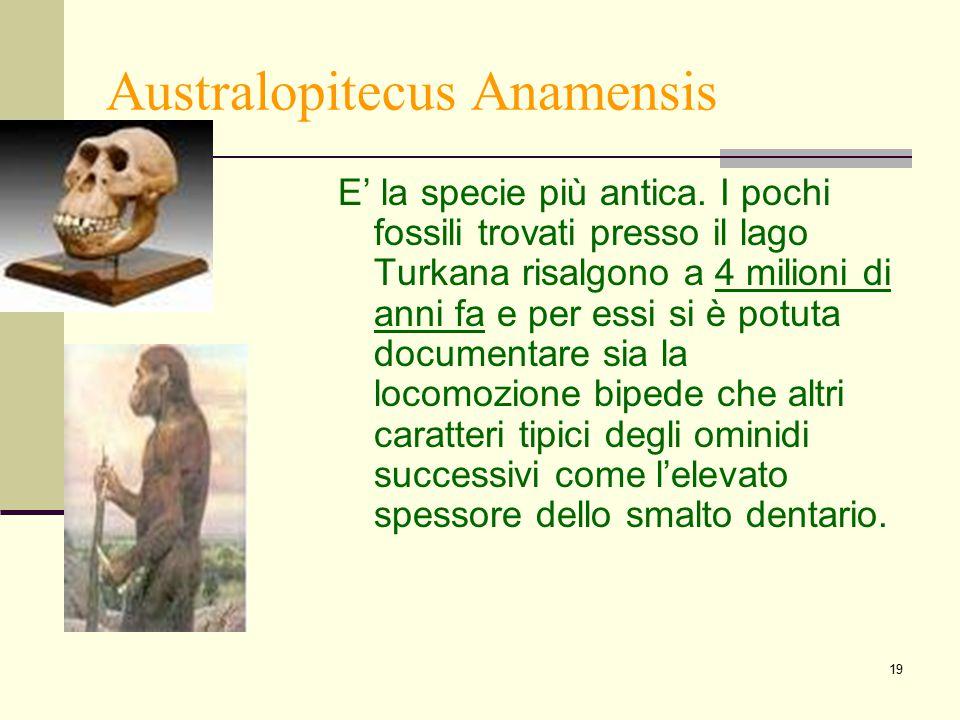 Australopitecus Anamensis