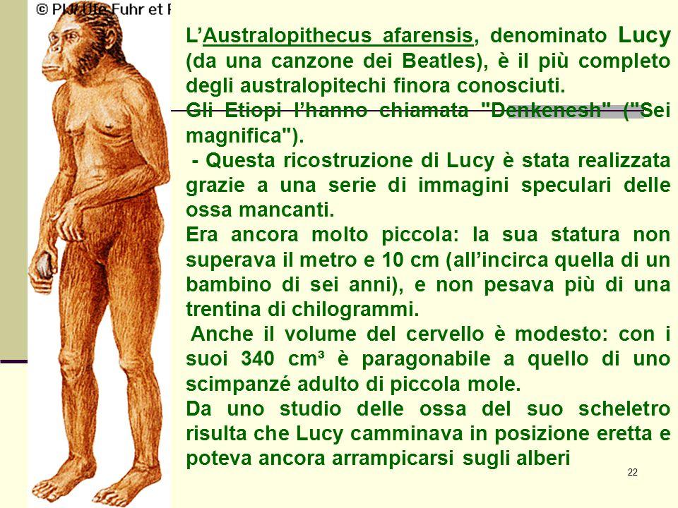 L'Australopithecus afarensis, denominato Lucy (da una canzone dei Beatles), è il più completo degli australopitechi finora conosciuti.