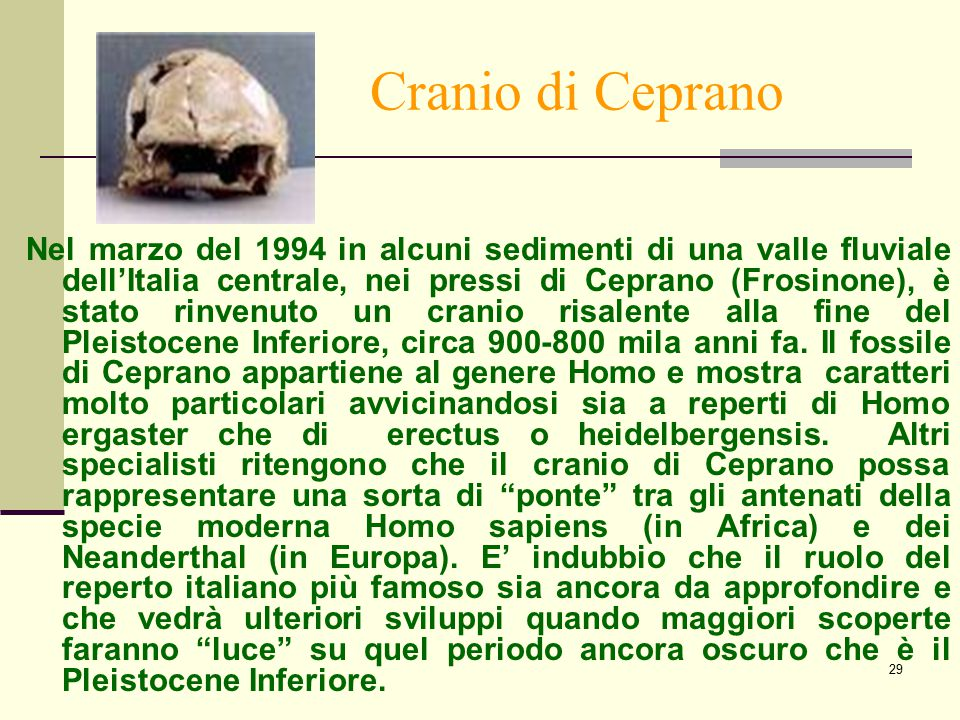 Cranio di Ceprano