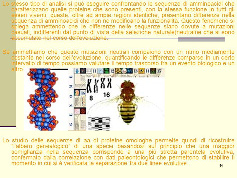 Lo stesso tipo di analisi si può eseguire confrontando le sequenze di amminoacidi che caratterizzano quelle proteine che sono presenti, con la stessa funzione in tutti gli esseri viventi; queste, oltre ad ampie regioni identiche, presentano differenze nella sequenza di amminoacidi che non ne modificano la funzionalità. Questo fenomeno si spiega ammettendo che le differenze nelle sequenze siano dovute a mutazioni casuali, indifferenti dal punto di vista della selezione naturale(neutrali)e che si sono accumulate nel corso dell'evoluzione.