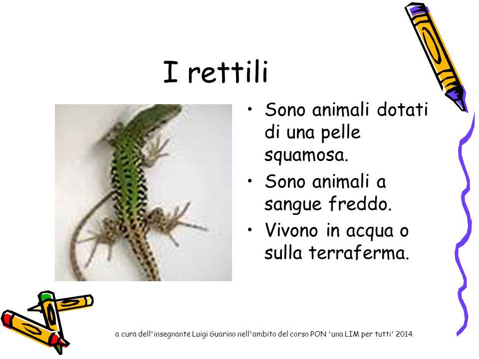 I rettili Sono animali dotati di una pelle squamosa.