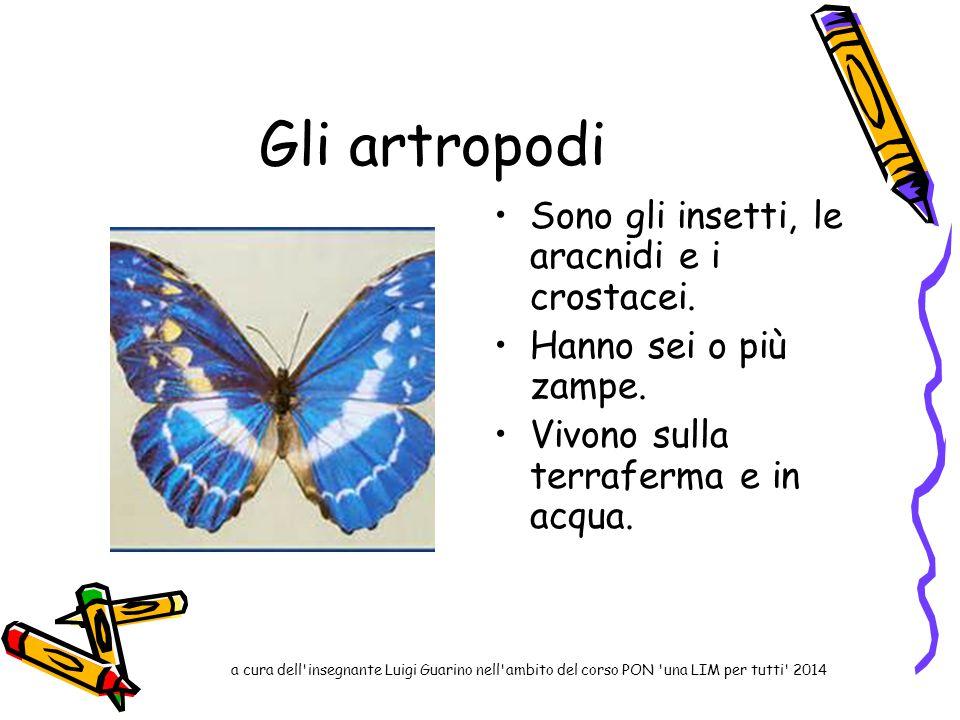 Gli artropodi Sono gli insetti, le aracnidi e i crostacei.