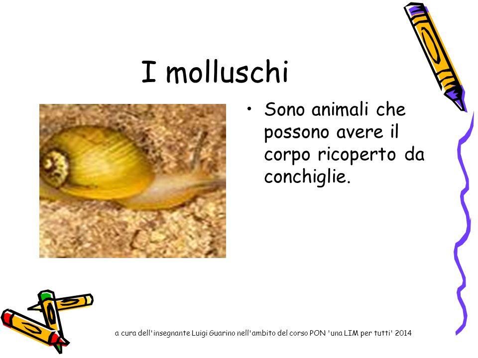 I molluschi Sono animali che possono avere il corpo ricoperto da conchiglie.