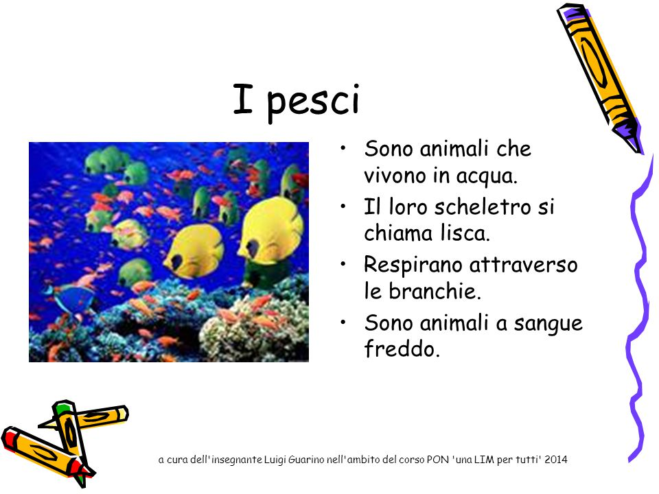 I pesci Sono animali che vivono in acqua.