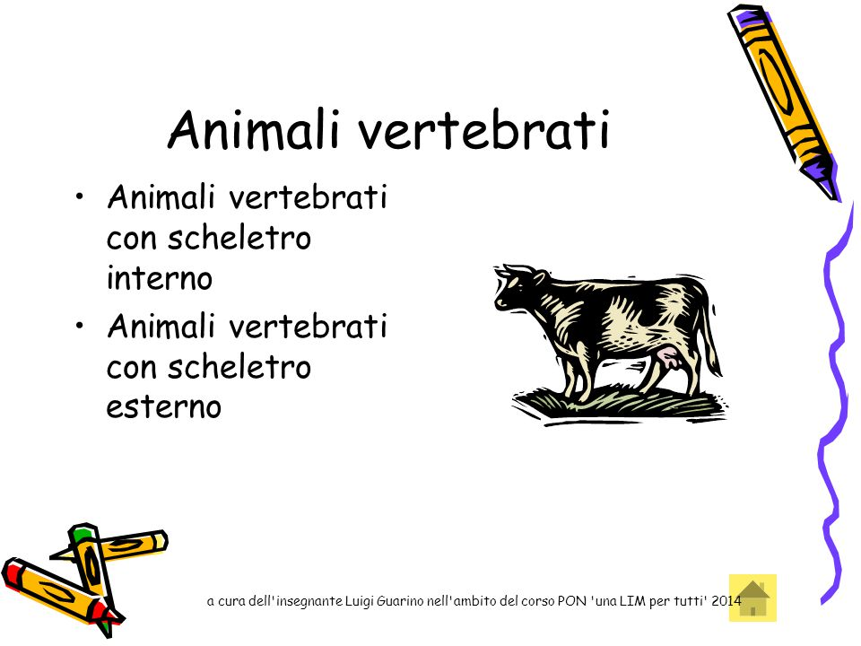 Animali vertebrati Animali vertebrati con scheletro interno
