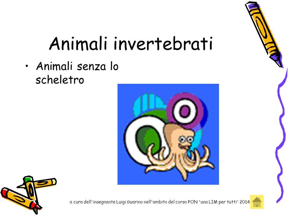 Animali invertebrati Animali senza lo scheletro