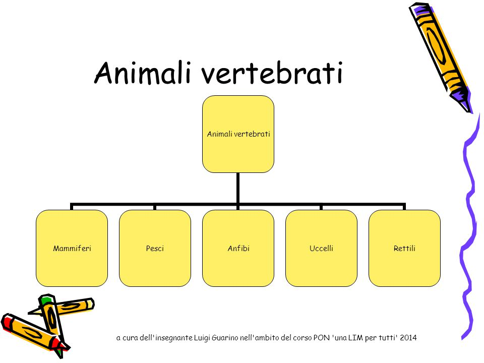 Animali vertebrati a cura dell insegnante Luigi Guarino nell ambito del corso PON una LIM per tutti 2014.