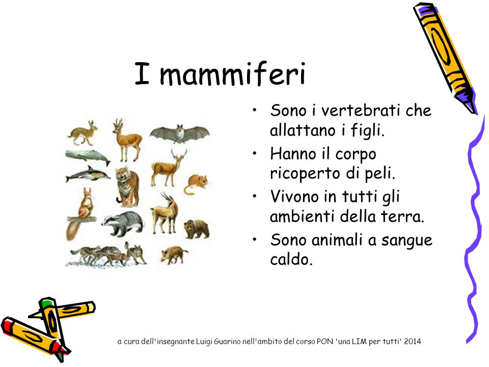 I mammiferi Sono i vertebrati che allattano i figli.