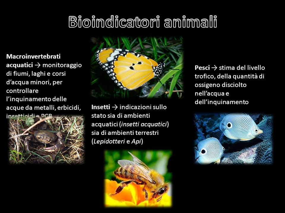 Bioindicatori animali