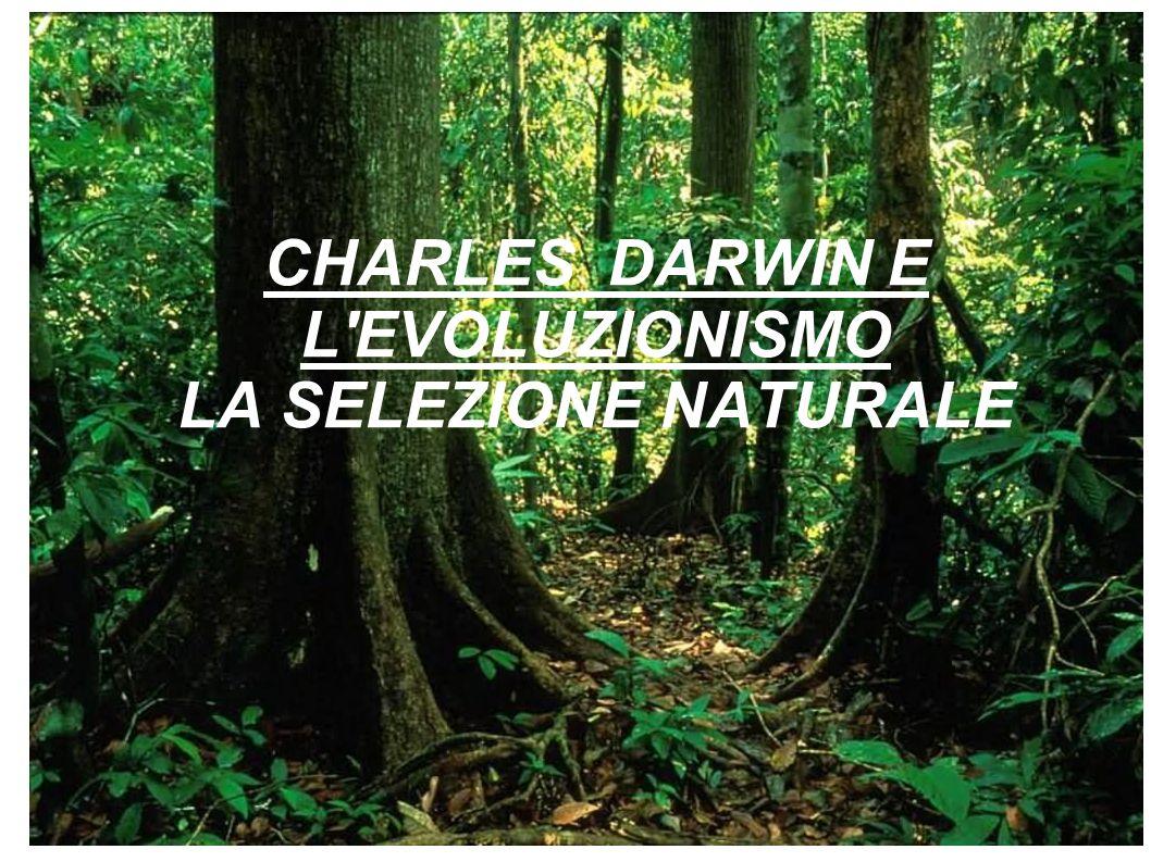 CHARLES DARWIN E L EVOLUZIONISMO LA SELEZIONE NATURALE