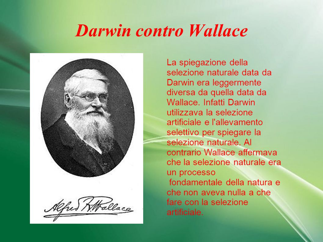 Darwin contro Wallace