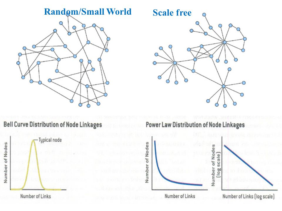 Random/Small World Scale free
