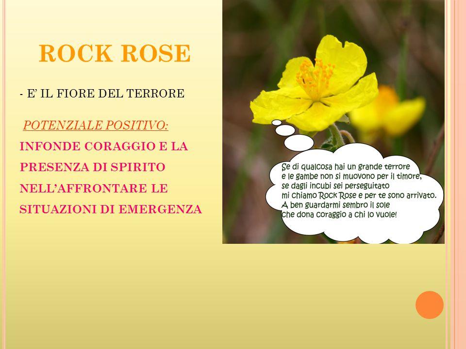ROCK ROSE E' IL FIORE DEL TERRORE POTENZIALE POSITIVO:
