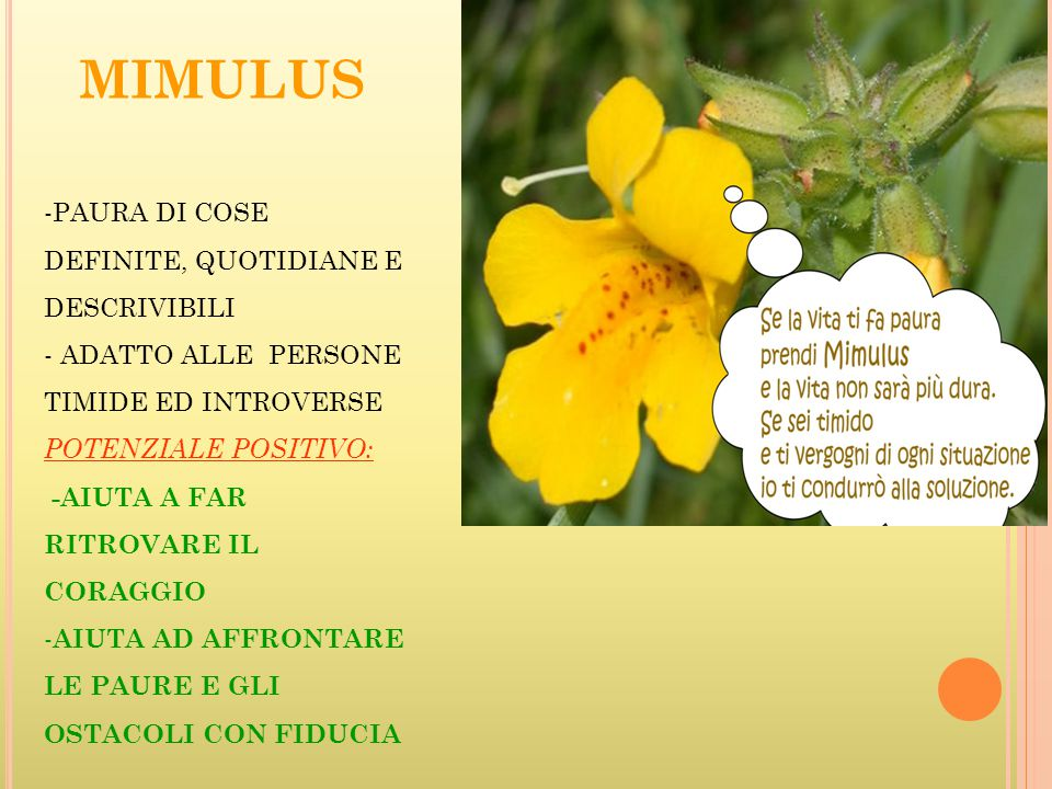 MIMULUS PAURA DI COSE DEFINITE, QUOTIDIANE E DESCRIVIBILI