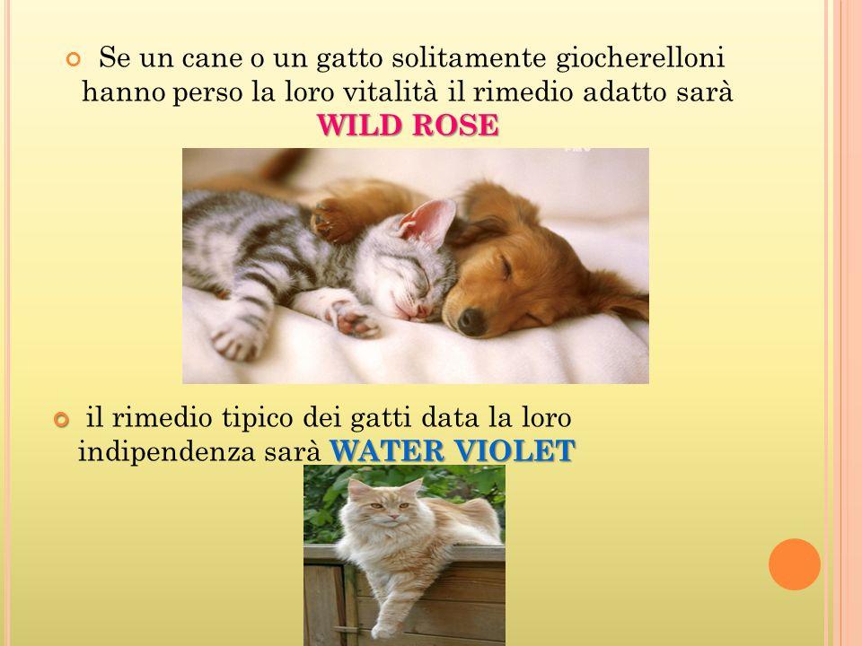 Se un cane o un gatto solitamente giocherelloni hanno perso la loro vitalità il rimedio adatto sarà WILD ROSE