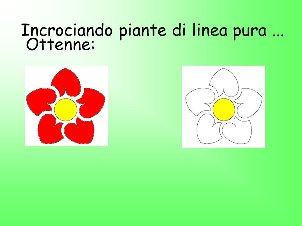 Incrociando piante di linea pura ...