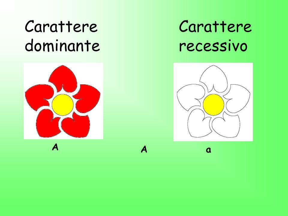 Carattere dominante Carattere recessivo A A a