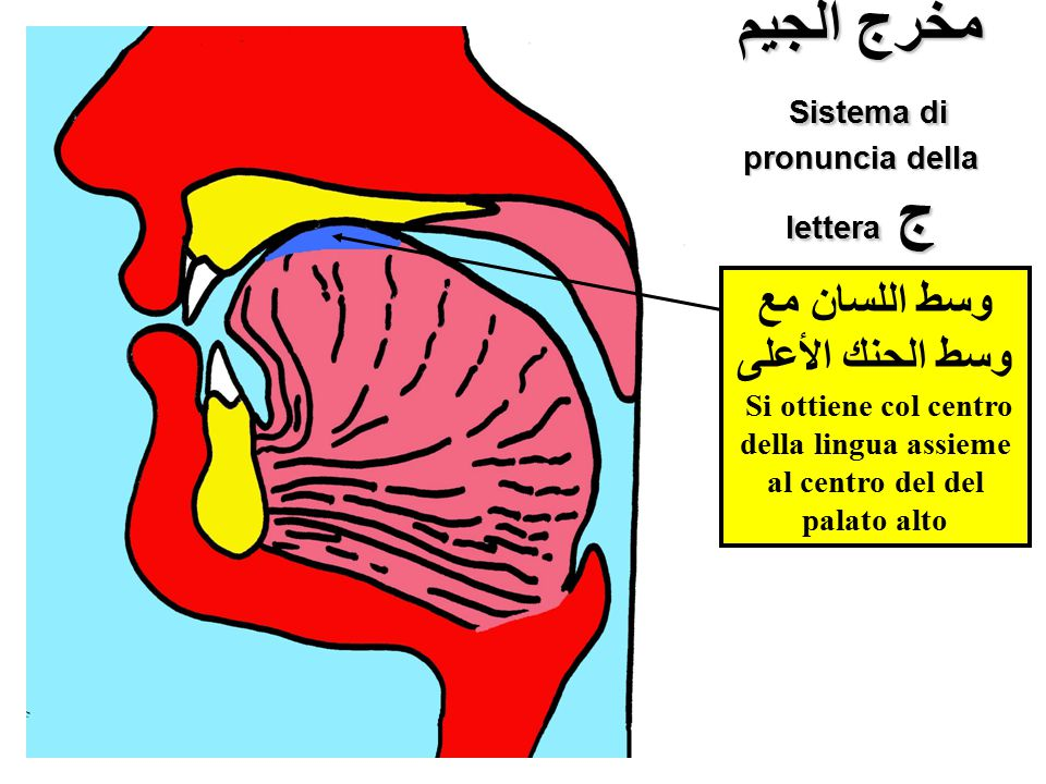 مخرج الجيم Sistema di pronuncia della lettera ج