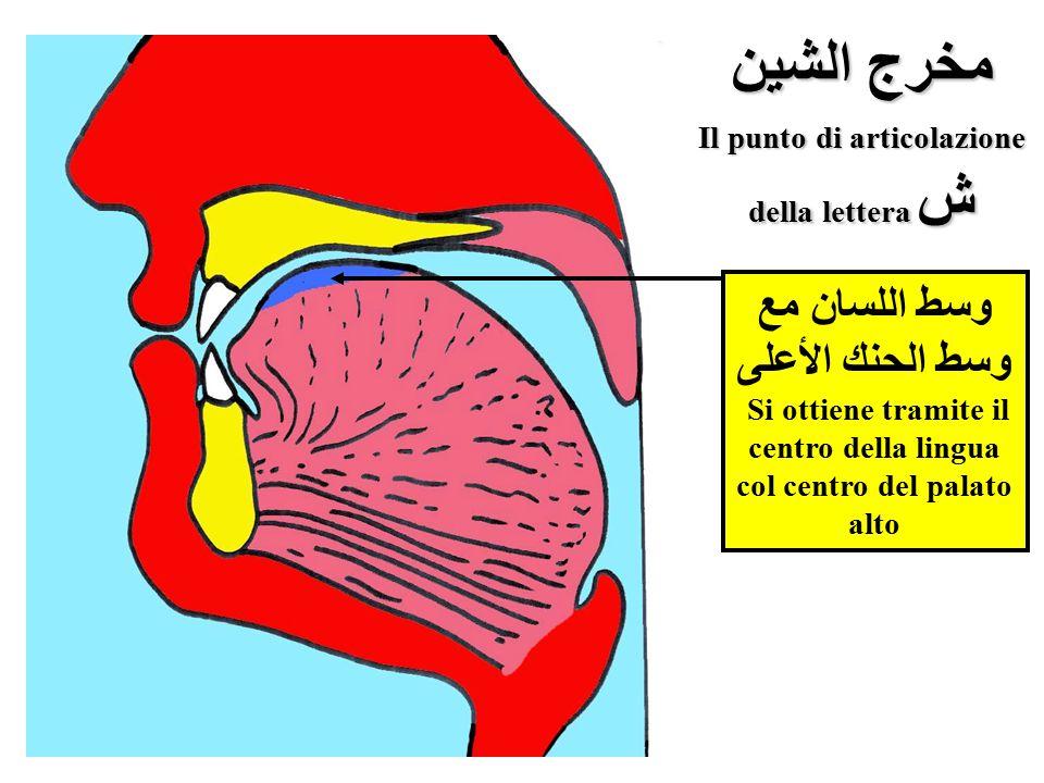 مخرج الشين Il punto di articolazione
