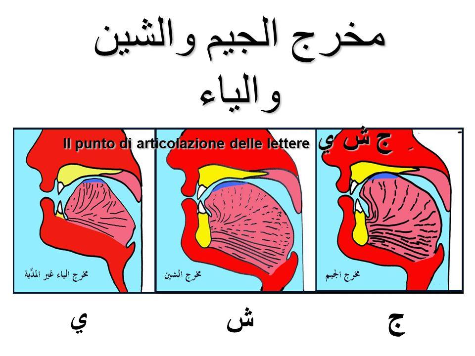 مخرج الجيم والشين والياء Il punto di articolazione delle lettere ِ ج ش ي