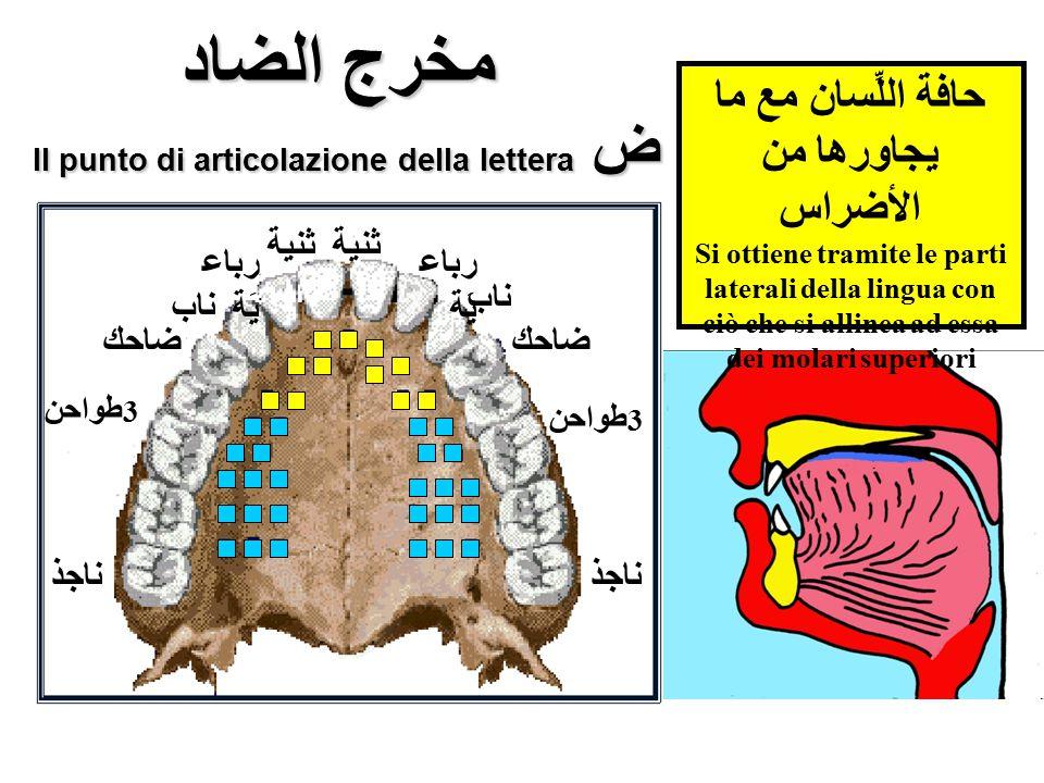 مخرج الضاد Il punto di articolazione della lettera ض