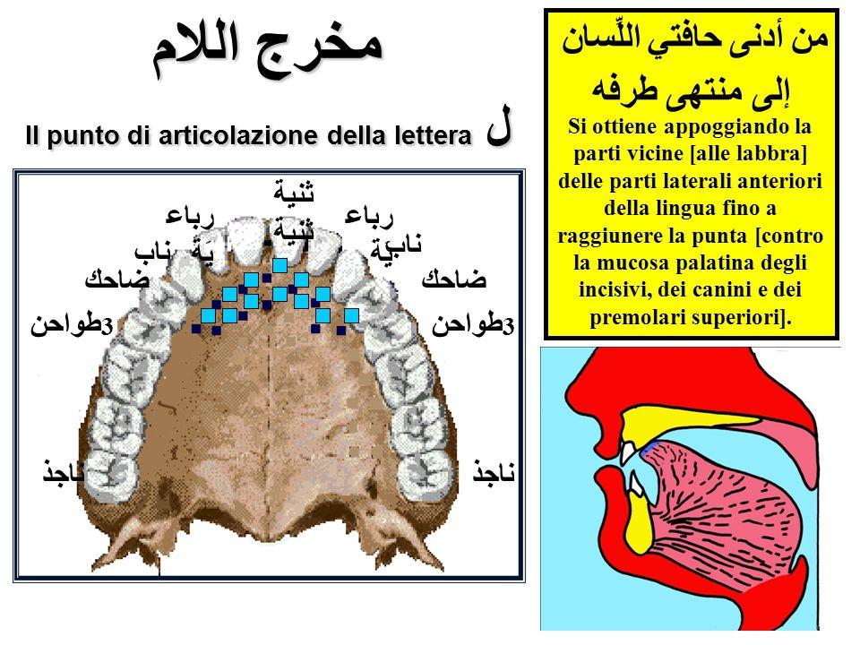 مخرج اللام Il punto di articolazione della lettera ل