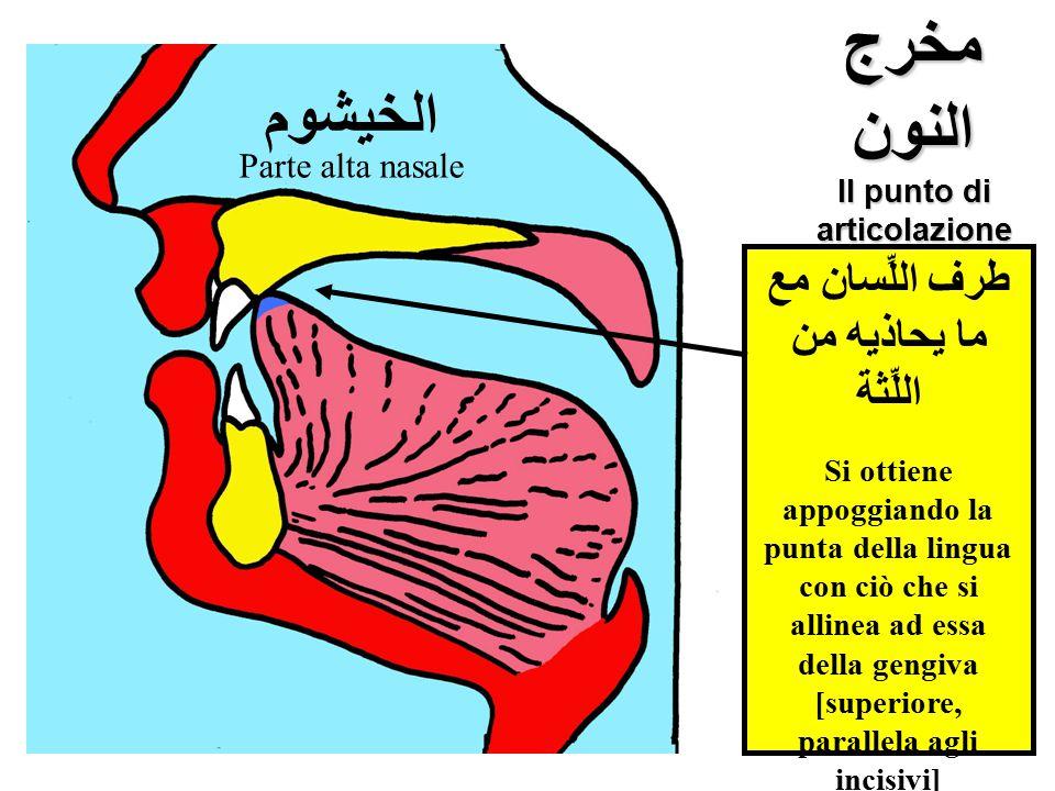 مخرج النون Il punto di articolazione della lettera ن