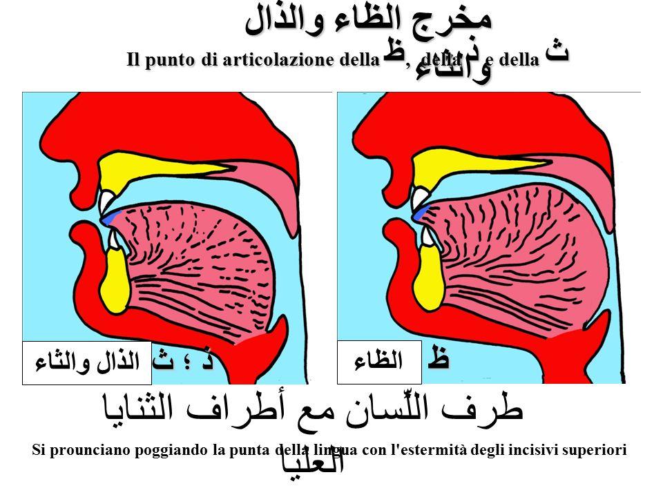 Il punto di articolazione della ظ, della ذ e della ث
