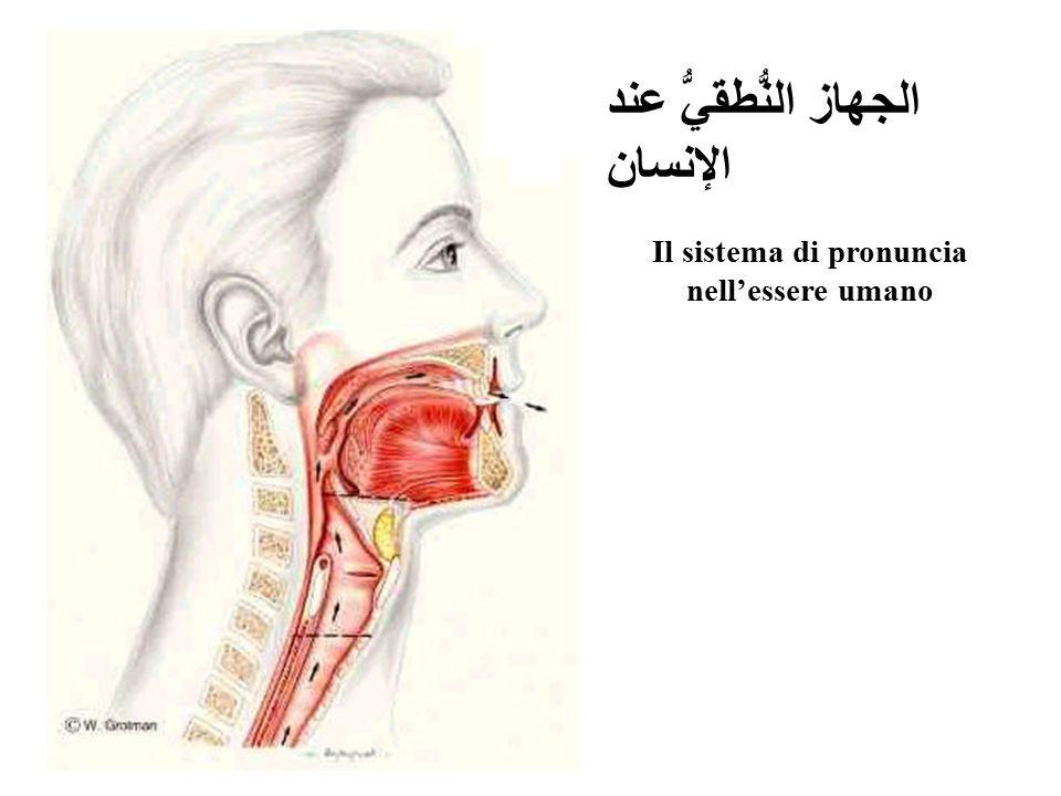 Il sistema di pronuncia nell'essere umano
