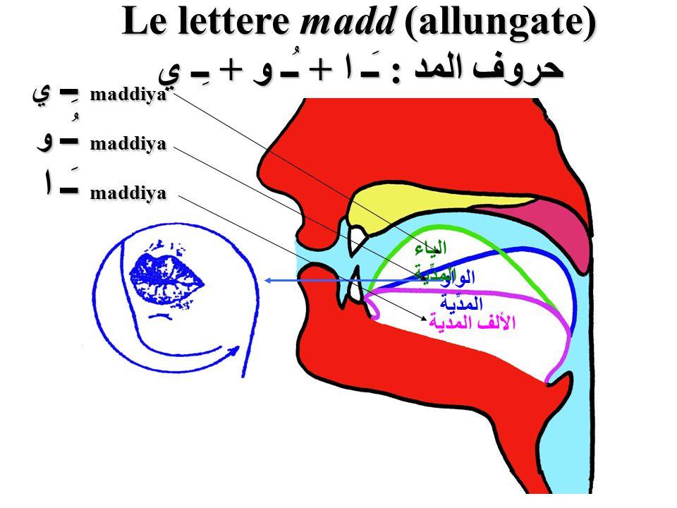 Le lettere madd (allungate) حروف المد : ـَـ ا + ـُـ و + ـِـ ي