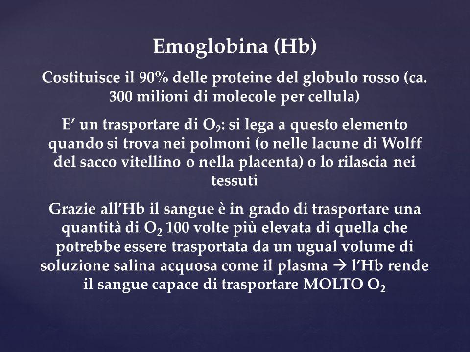 Emoglobina (Hb) Costituisce il 90% delle proteine del globulo rosso (ca. 300 milioni di molecole per cellula)