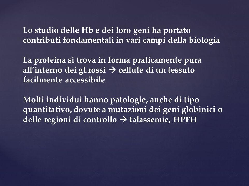 Lo studio delle Hb e dei loro geni ha portato contributi fondamentali in vari campi della biologia