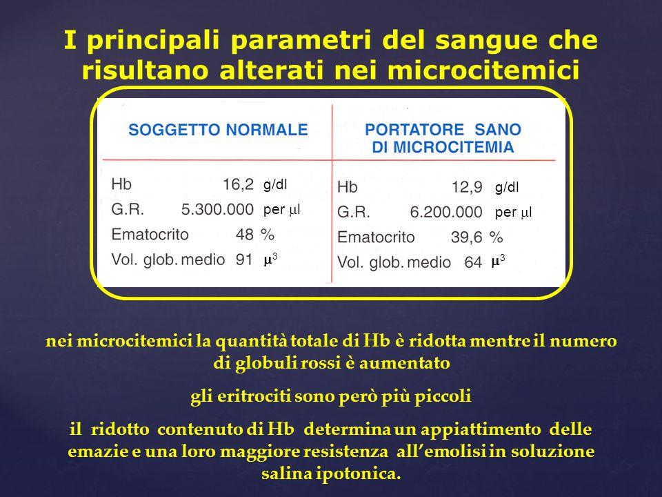 gli eritrociti sono però più piccoli