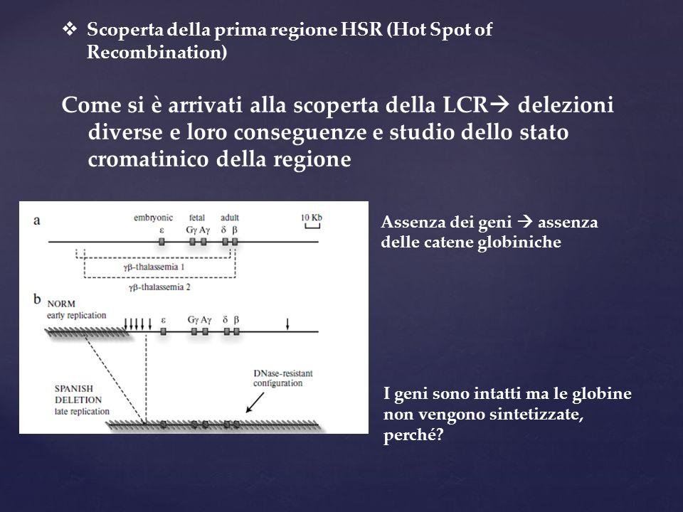 Scoperta della prima regione HSR (Hot Spot of Recombination)