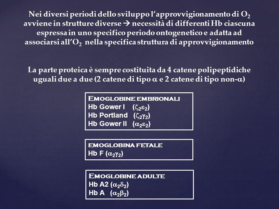 Nei diversi periodi dello sviluppo l'approvvigionamento di O2 avviene in strutture diverse  necessità di differenti Hb ciascuna espressa in uno specifico periodo ontogenetico e adatta ad associarsi all'O2 nella specifica struttura di approvvigionamento